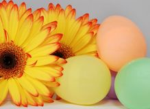 Colorful Easter Eggs and Gerber Daisy Stock Photos