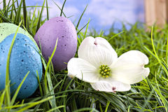 Colorful Easter eggs in grass Stock Images