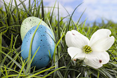 Colorful easter eggs in grass with Dogwood blossom Royalty Free Stock Photography