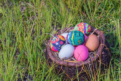 Colorful easter eggs in  grass nest. Stock Images