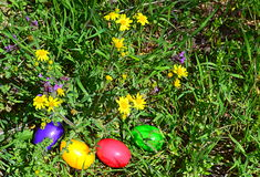 Colorful Easter eggs in green grass Royalty Free Stock Image