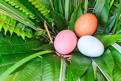 Colorful easter eggs in green grass nest. Stock Photography
