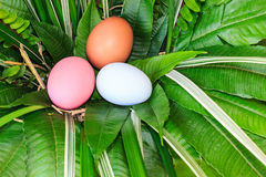Colorful easter eggs in green grass nest. Stock Photo