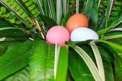 Colorful easter eggs in green grass nest. Royalty Free Stock Photography