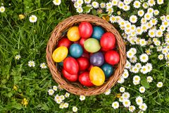 Colorful Easter eggs in the green grass with white spring flowers stock image