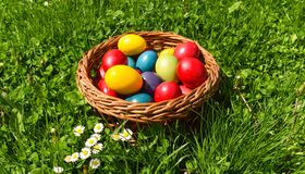 Colorful Easter eggs in the green grass with white spring flowers royalty free stock photos