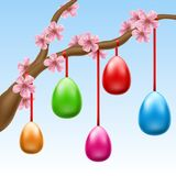 Colorful Easter eggs hanged on cherry branch. With pink flowers. Vector illustration for Easter and spring design Royalty Free Stock Photos