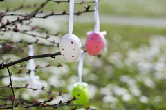 Colorful Easter eggs hanging on branches outdoors with white flo Royalty Free Stock Image