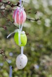 Colorful Easter eggs hanging on branches outdoors with white flo Royalty Free Stock Photos