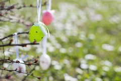 Colorful Easter eggs hanging on branches outdoors with white flo Stock Photo