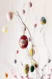 Colorful Easter eggs hanging on branches Royalty Free Stock Images
