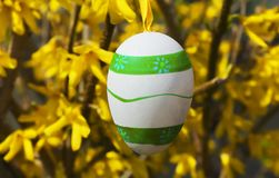 Colorful easter eggs hanging on the forsythia shrub in the garden royalty free stock photos