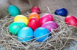 Colorful easter eggs in hay on sackcloth background Stock Images
