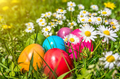 Colorful Easter eggs lying in the grass Royalty Free Stock Image