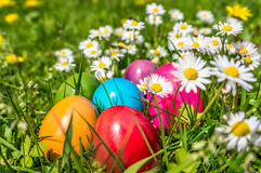 Colorful Easter eggs lying in the grass between daisy flowers Stock Image