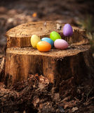 Colorful easter eggs lying on wooden stump Royalty Free Stock Photography