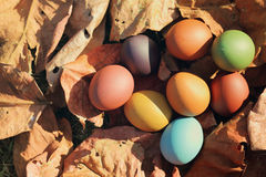 Colorful Easter eggs in nature. royalty free stock image