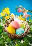 Colorful Easter Eggs in a nest Royalty Free Stock Photos