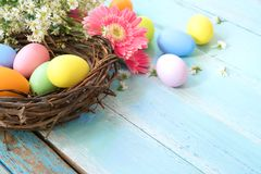 Colorful Easter eggs in nest with flowers on blue wooden background. stock images