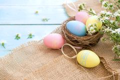 Colorful Easter eggs in nest with flowers on blue wooden background. Royalty Free Stock Photo