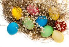 Colorful Easter eggs and a nest Royalty Free Stock Images