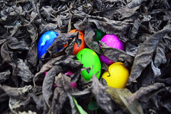 Colorful easter eggs in nest on meadow Stock Images