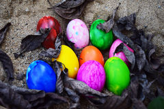 Colorful easter eggs in nest on meadow Stock Photos