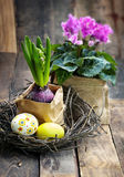 Colorful easter eggs in a nest  with pink  cyclamen on wooden ba Stock Image
