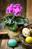 Colorful easter eggs in a nest  with pink  cyclamen on wooden ba Stock Photos