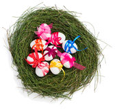Colorful easter eggs in a nest, top view Royalty Free Stock Image