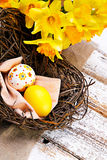 Colorful easter eggs in a nest  with yellow narcis Stock Image