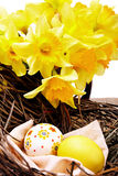 Colorful easter eggs in a nest  with yellow narcissus on white Stock Photos
