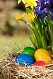 Colorful easter eggs outdoor Stock Photo