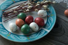 Colorful easter eggs and pussy willow, spring holidays concept. Selective focus, top view, space for text Royalty Free Stock Images