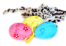 Colorful easter eggs and pussy-willow on white background Royalty Free Stock Photos