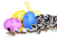 Colorful easter eggs and pussy-willow on white background Stock Photos