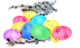 Colorful easter eggs and pussy-willow on white background Stock Photography