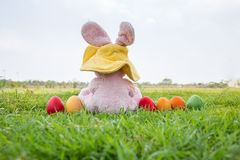 Colorful easter eggs and rabbit wear hat Stock Photo