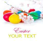 Colorful Easter eggs with spring blossom flowers Royalty Free Stock Image