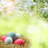 Colorful easter eggs with spring blossoms Stock Photo
