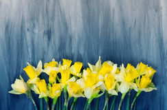 Colorful Easter eggs and spring daffodils on paper background Stock Image