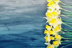 Colorful Easter eggs and spring daffodils on paper background Royalty Free Stock Photos