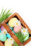 Colorful Easter Eggs with Spring Flowers Royalty Free Stock Images