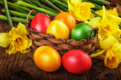 Colorful Easter eggs with spring flowers on dark wooden board sunlight effect Royalty Free Stock Image