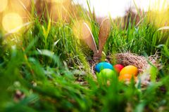 Easter eggs in a spring meadow stock photography