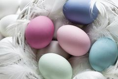 Colorful easter eggs and white feathers Royalty Free Stock Photos