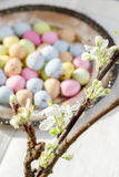Colorful easter eggs and white flowers Royalty Free Stock Photos