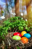 Easter eggs in a forest scenery royalty free stock images