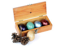 Colorful easter eggs in wood box on white background. Royalty Free Stock Image