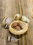 Colorful easter eggs on wooden plank Royalty Free Stock Image